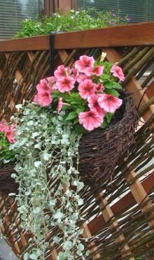 Seinäamppeli kukilla
